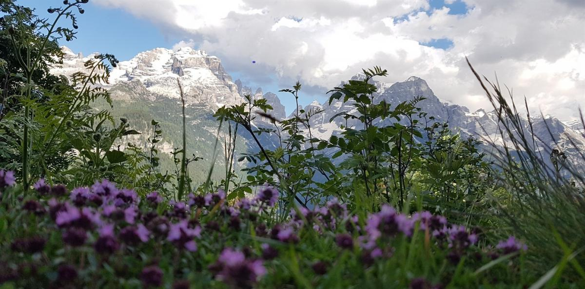 Your serenity in the center, the Brenta Dolomites around!